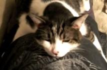 ダラ〜ンとくつろぐ猫