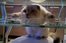不思議な格好でくつろぐ猫