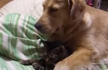 いっしょに眠る犬と猫