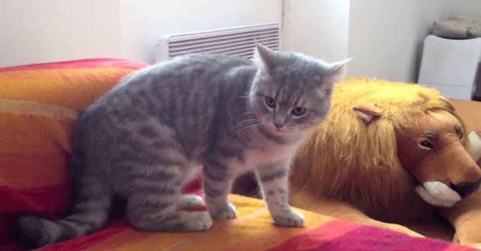 不適な笑いを浮かべる猫