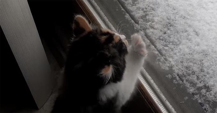 雪に触りたい子猫