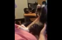 顔を拭く子猫