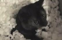 発泡スチロール猫