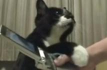 携帯電話にヤキモチを焼く猫