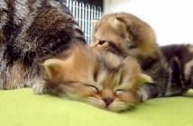 眠り続ける子猫