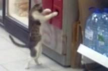 釣り銭口を確認する猫