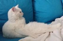 足を伸ばしてテレビを観る猫