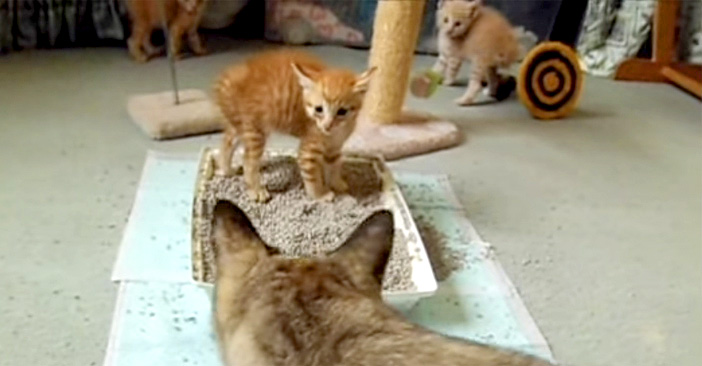 初めて猫に会った子猫