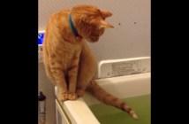 お風呂で遊ぶ猫