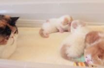 子猫に話しかける母猫