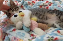 ぬいぐるみを抱きしめる子猫