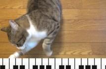 ピアノを引く猫
