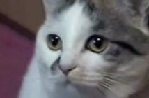 ちょうだいと言う猫