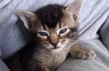 眠たすぎてお返事できない子猫