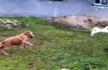 犬と猫の追いかけっこ