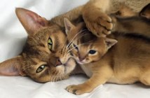母猫と子猫のホッコリタイム