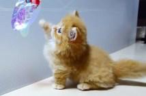 猫パンチが届かない子猫
