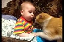 赤ちゃんに猛アプローチする猫