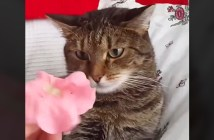 猫の頭に花を乗せると