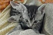 必死の形相で眠気に耐える子猫