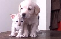 子犬と子猫にいやされる