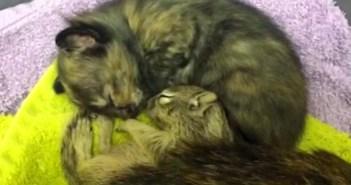 猫の親子に迎えられたリス