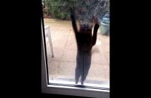 ドアを開けて欲しい猫