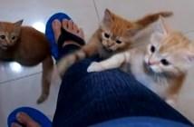 登ってくる子猫