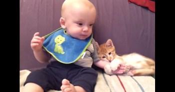 赤ちゃんに抱きついて離さない子猫