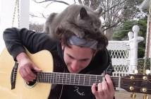 頭の上でギターの音色を聞く猫