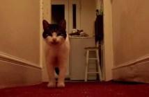 ハローと言いながら出迎えてくれる猫