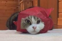 変顔の猫のまるちゃん