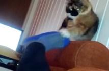 飼い主さんの足を力一杯引っ張る猫