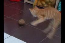 ジャガイモと戦う子猫