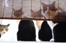 順番待ちをする猫