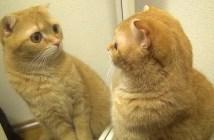 鏡の中の自分を見つめる猫