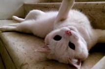 階段をクネクネしながら降りる猫