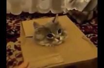 ダンボール箱から顔を出す子猫