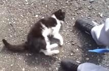 足元にコテンと転がる猫