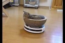 ルンバの上でくつろぐ猫