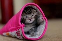 鍋つかみ(ミトン)の中で遊ぶ子猫がかわいい
