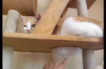 モフモフしたくなる猫のお腹