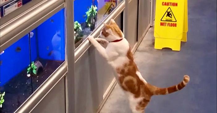 ペットショップに通う猫