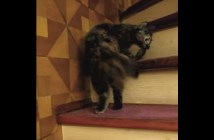 シッポをくわえて階段を登る猫