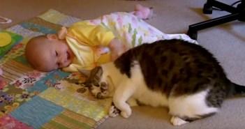 赤ちゃんに触りたいけど触れない猫