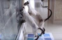 お風呂の外で待つ猫