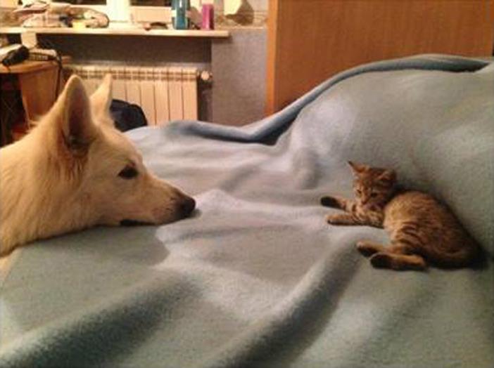 犬と子猫、初めての出会い