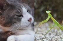 猫とカマキリのコント