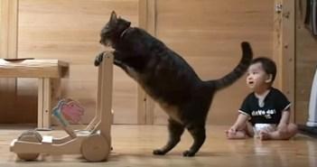 手押し車の使い方を教える猫