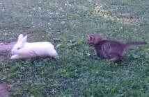 子うさぎと追いかけっこをする子猫